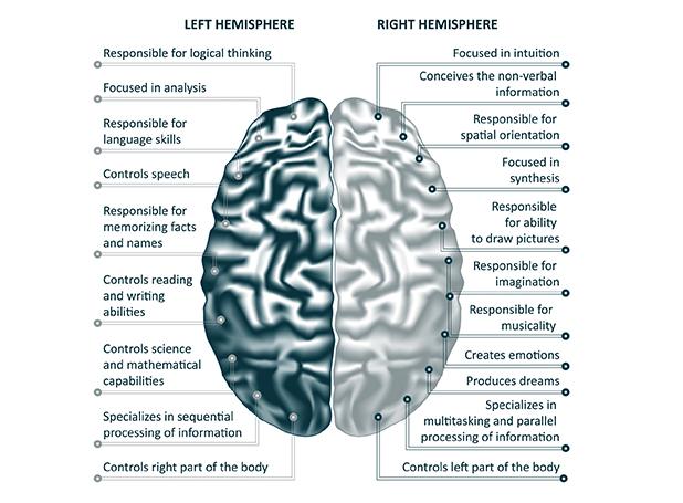 the-functional-brain
